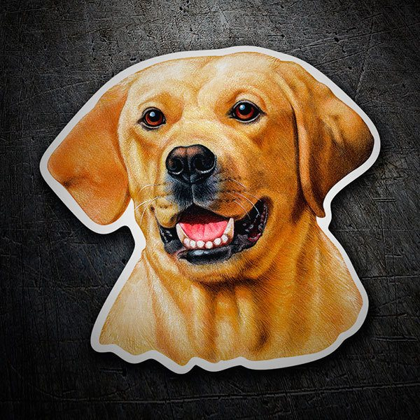 Pegatinas: Yellow Labrador Retriever