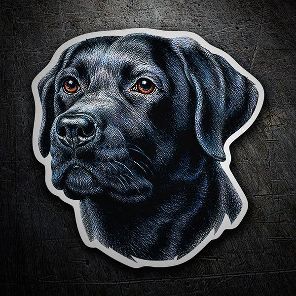 Pegatinas: Black Labrador Retriever
