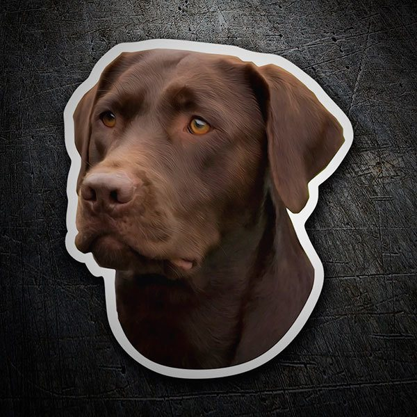 Pegatinas: Chocolate Labrador Retriever