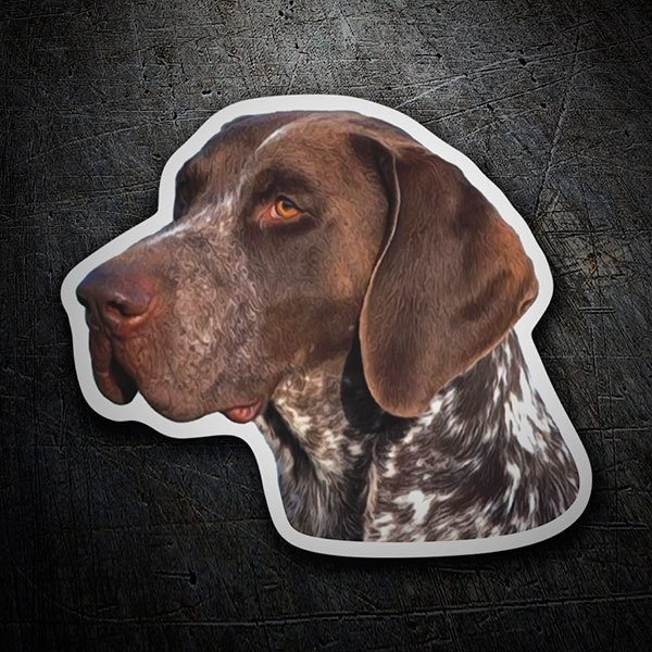 Pegatinas: German Shorthaired Pointer