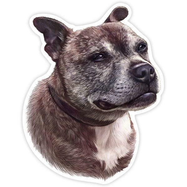 Pegatinas: Staffordshire Bull Terrier