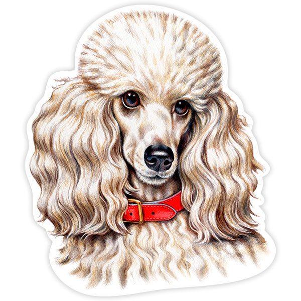 Pegatinas: White Miniature Poodle