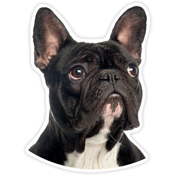Pegatinas: Bulldog francés