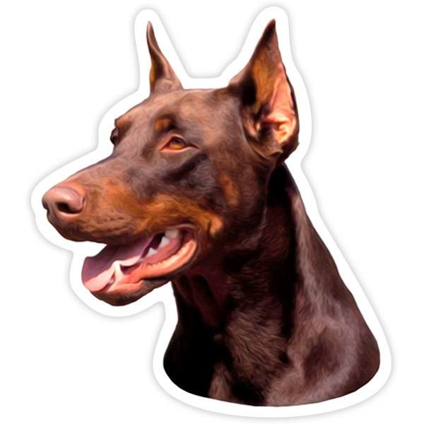 Pegatinas: Red Doberman Pinscher