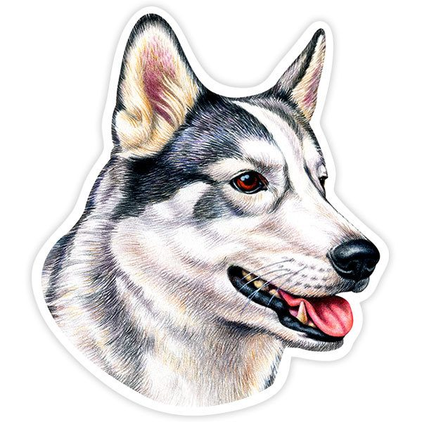 Pegatinas: Siberian Husky