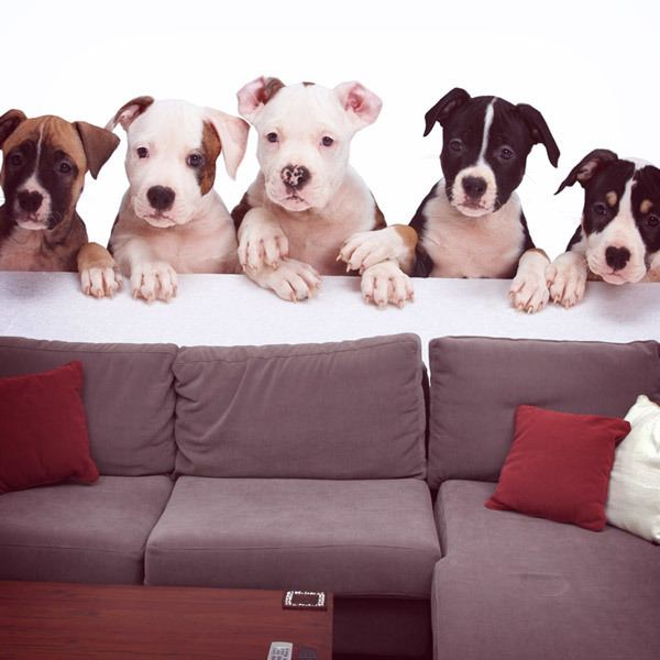 Fotomurales: Perros