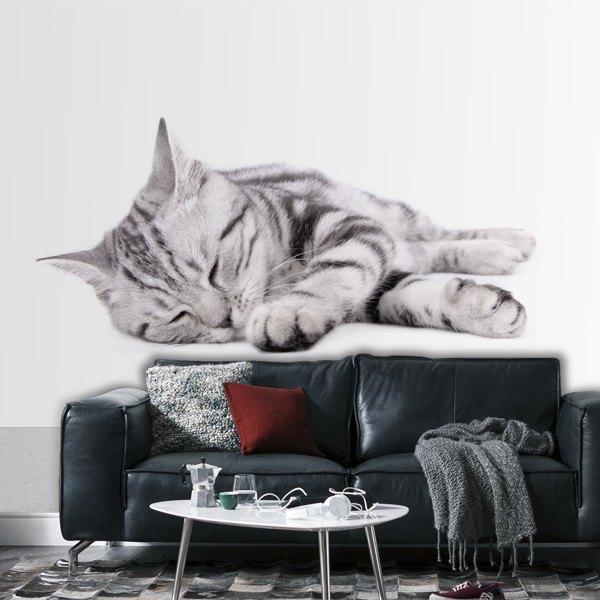 Fotomurales: Gato Luna