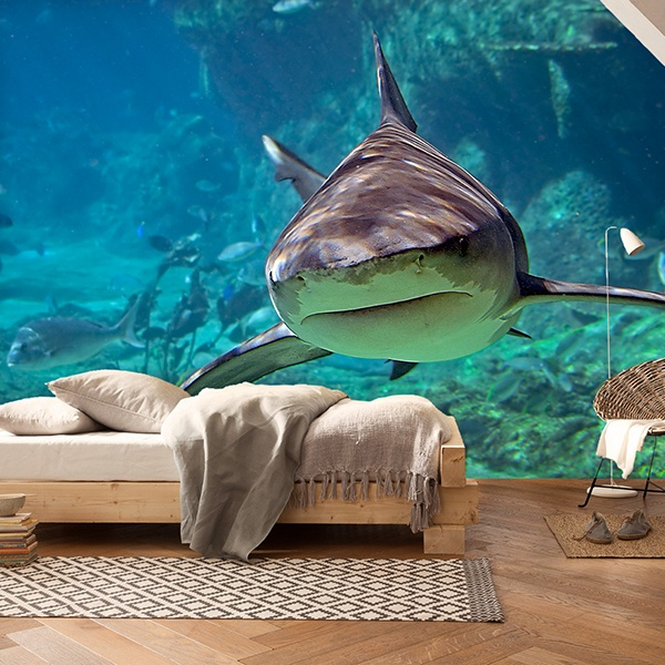 Fotomurales: Tiburón