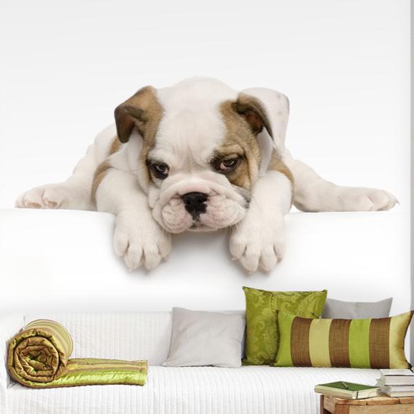 Fotomurales: Bulldog