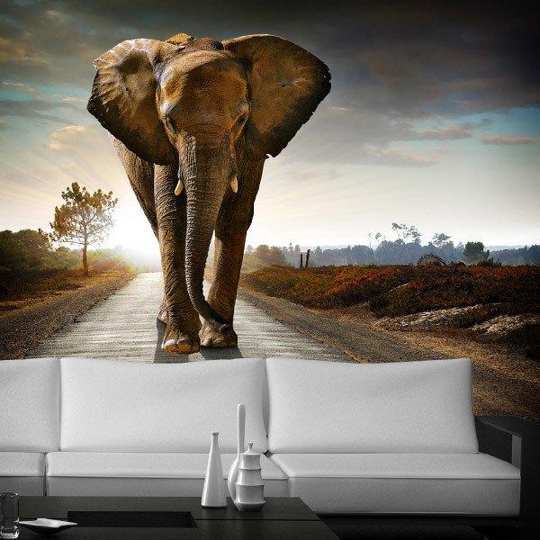 Fotomurales: Elefante