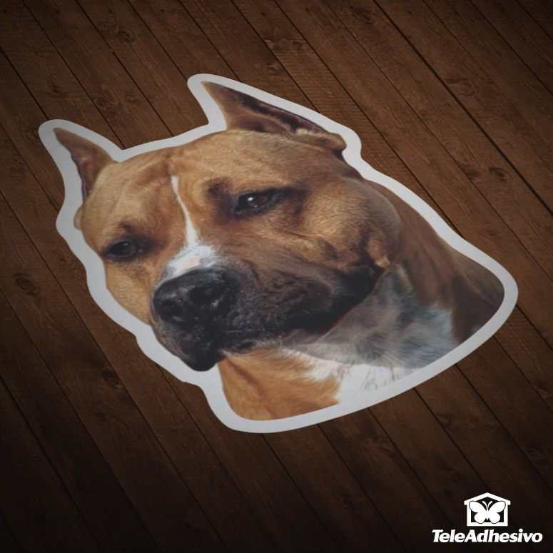 pegatinas-coches-motos-american-staffordshire-terrier