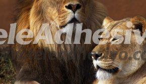 fotomurales-leon-y-leona