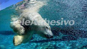 fotomurales-oso-polar