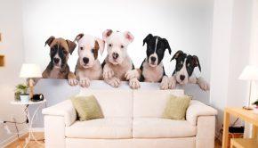 Un fotomural de cinco pequeños perros que puede formar parte de tus ideas de decoración