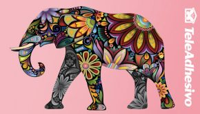 Elefante hindú - Vinilo adhesivo