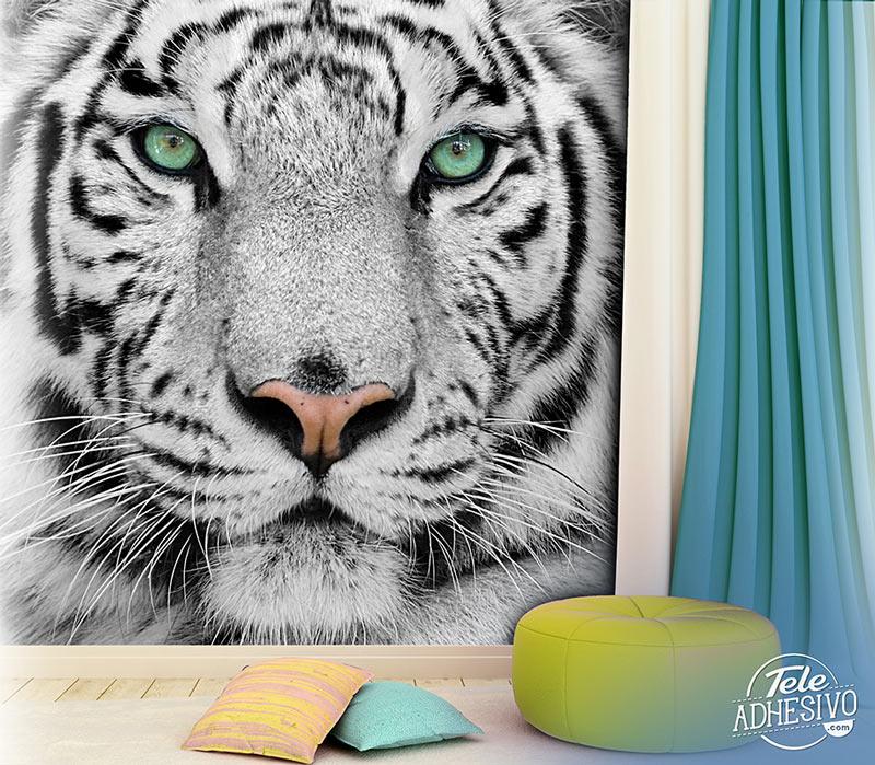 Fotomural tigre albino