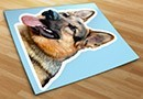 Pegatinas razas perro