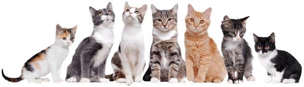Vinilo adhesivo de gatos de diferentes colores y tama os - Vinilos decorativos gatos ...