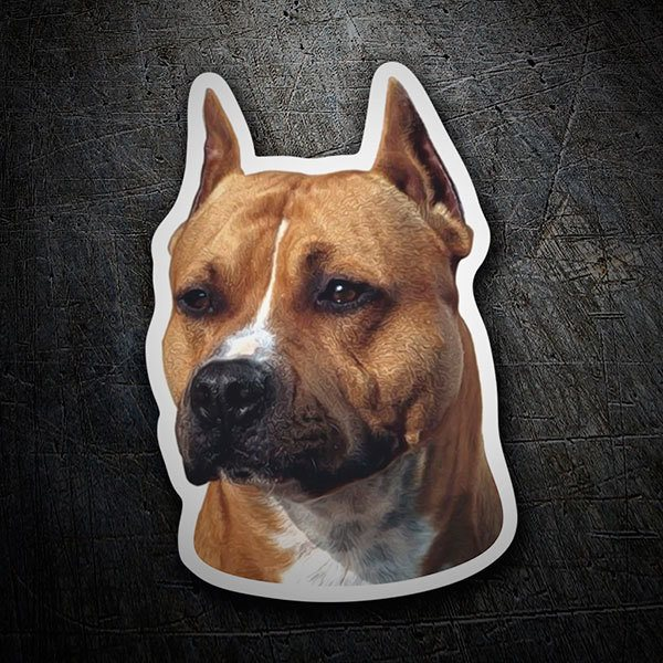 Pegatinas: American Staffordshire Terrier