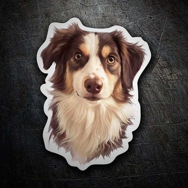 Pegatinas: Border Collie australiano