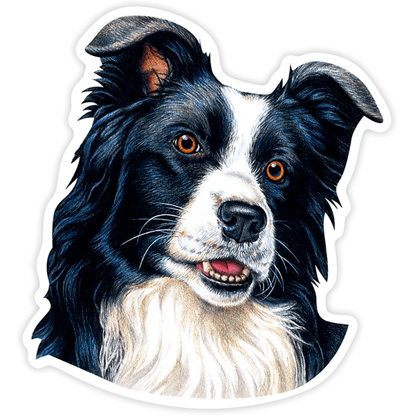Pegatinas: Border Collie 0