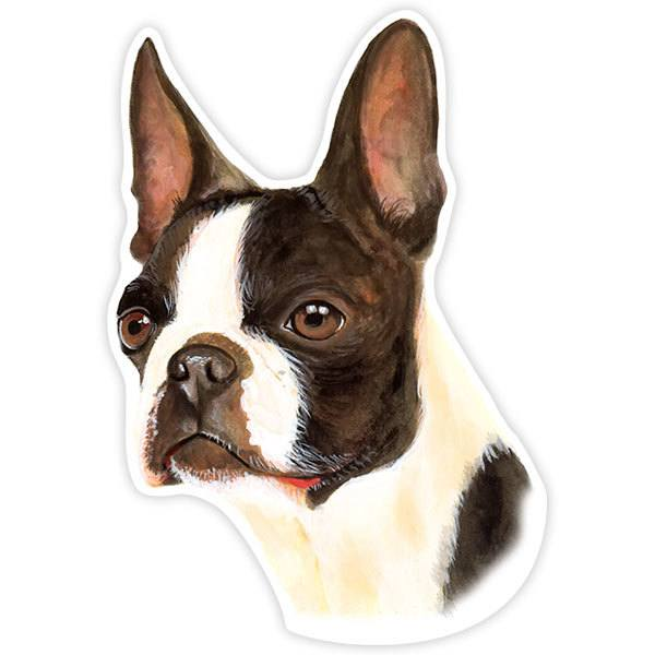 Pegatinas: Boston Terrier