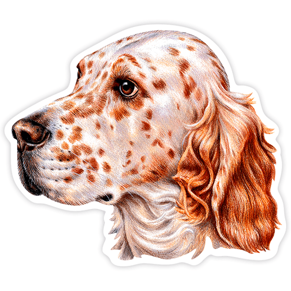 Pegatinas: English Setter