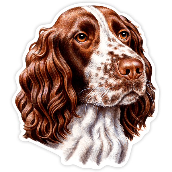 Pegatinas: English Springer Spaniel