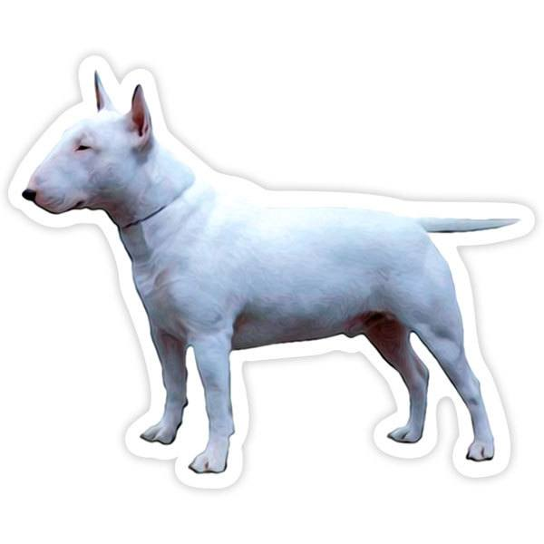 Pegatinas: Mini Bull Terrier