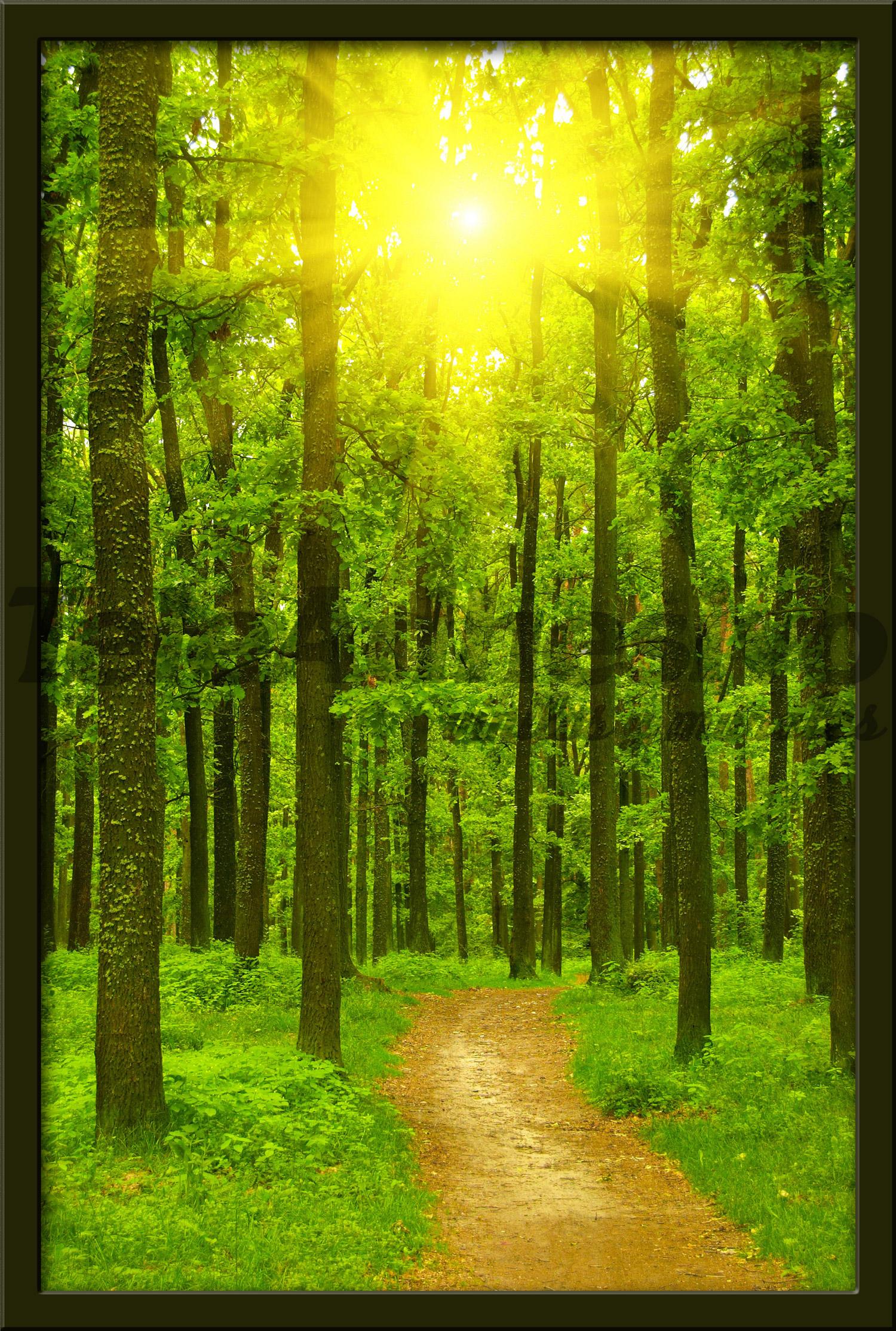 Vinilo decorativo camino en el bosque - Fotomurales para puertas ...