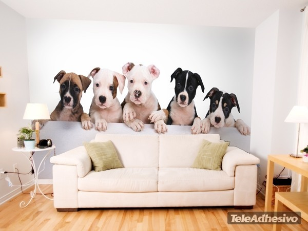 Cachorros de perro de presa - Fotomurales pared ...