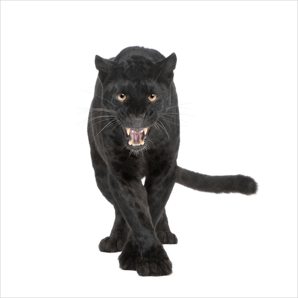 Fotomurales: Pantera Negra
