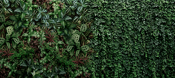 Fotomurales: Pared de vegetación