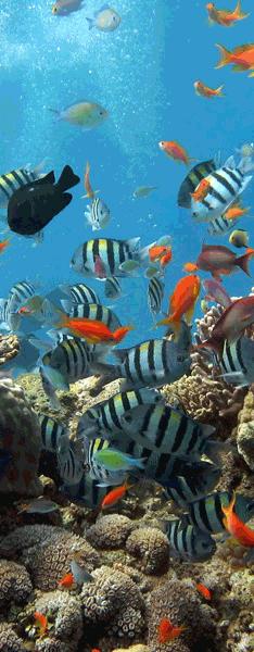 Vinilos Decorativos: Fondo marino