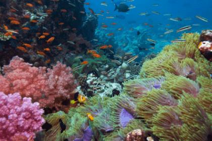 Vinilo decorativo fondo del mar - Fotos fondo del mar ...